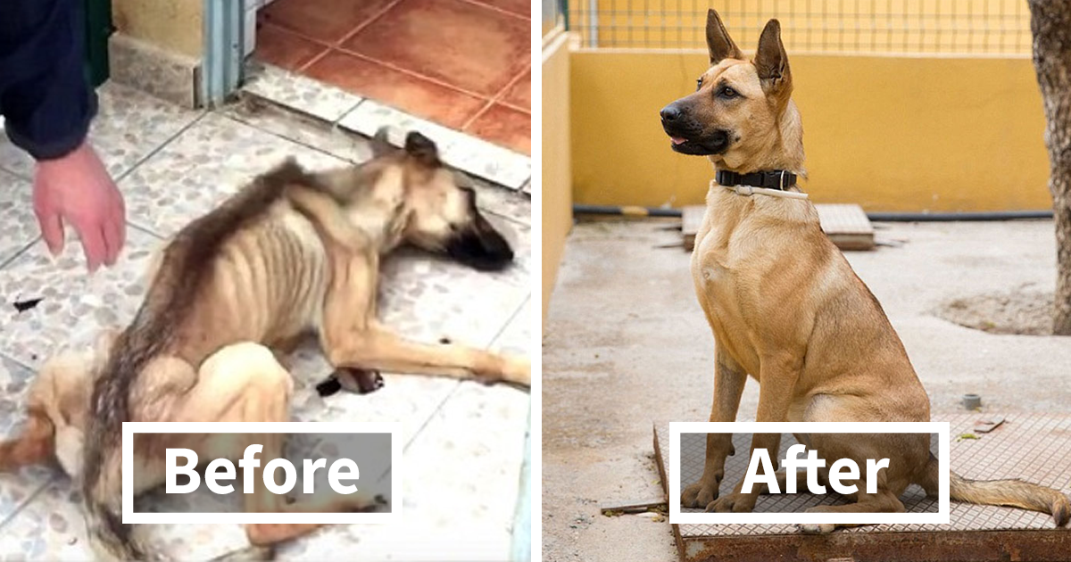 No One Wanted This Puppy Because It Was Different So Hilary Duff - 27 amazing transformations of dogs and cats before after adoption