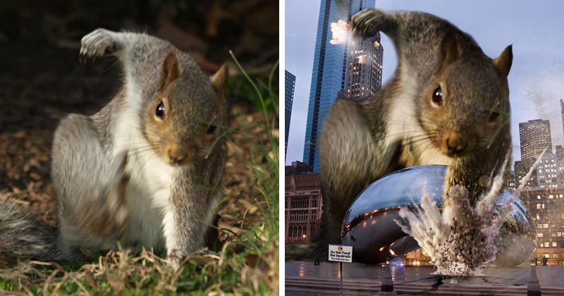squirrel-photoshop-battle-fb3-800x420.pn