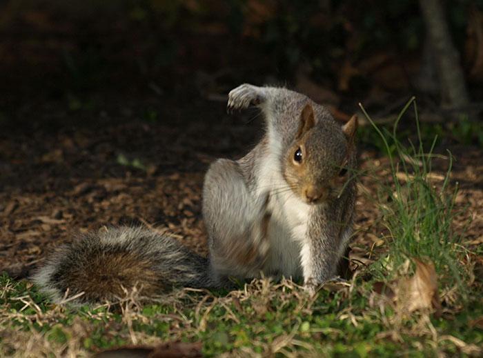 squirrel-photoshop-battle-40