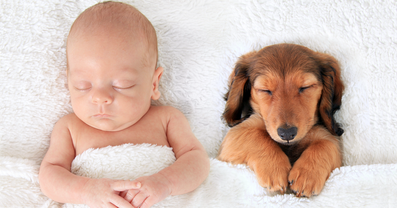 865a95899 10 Pics That Prove Dogs Are Better Than A Pillow - ViraScoop