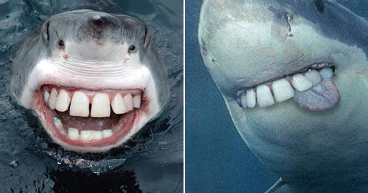 What Sharks Would Look Like If They Had Human Teeth Virascoop