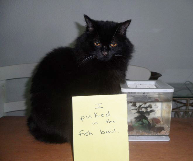 15 Guilty Cats That Are Not Sorry Virascoop
