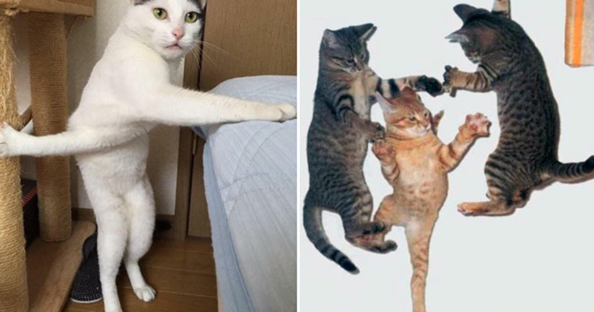Cat Ninjas Masters Of The Ancient Art Of Ninjutsu Virascoop