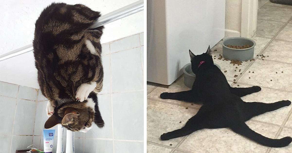 Cat act nsw