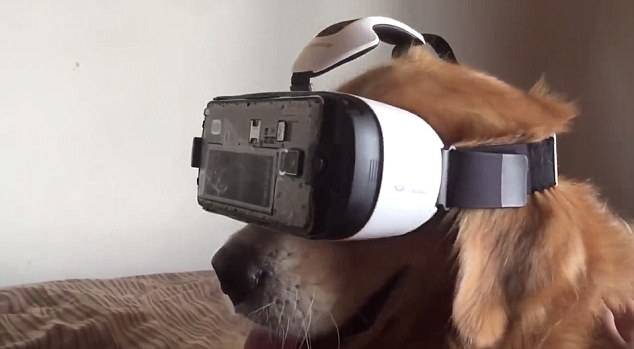 Good dog, virtual dog: His owner posted video footage to YouTube which shows the three-minute event