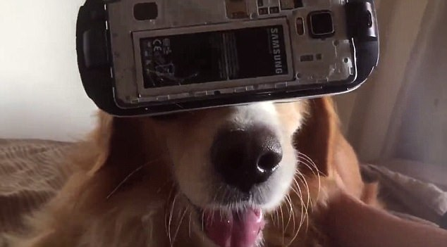 The dog was shown drooling throughout the video as he watched the special effects