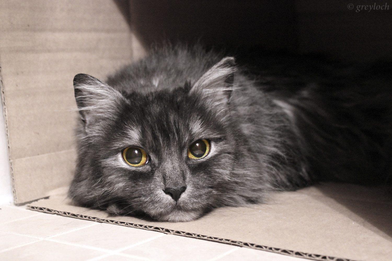 sad cat photo