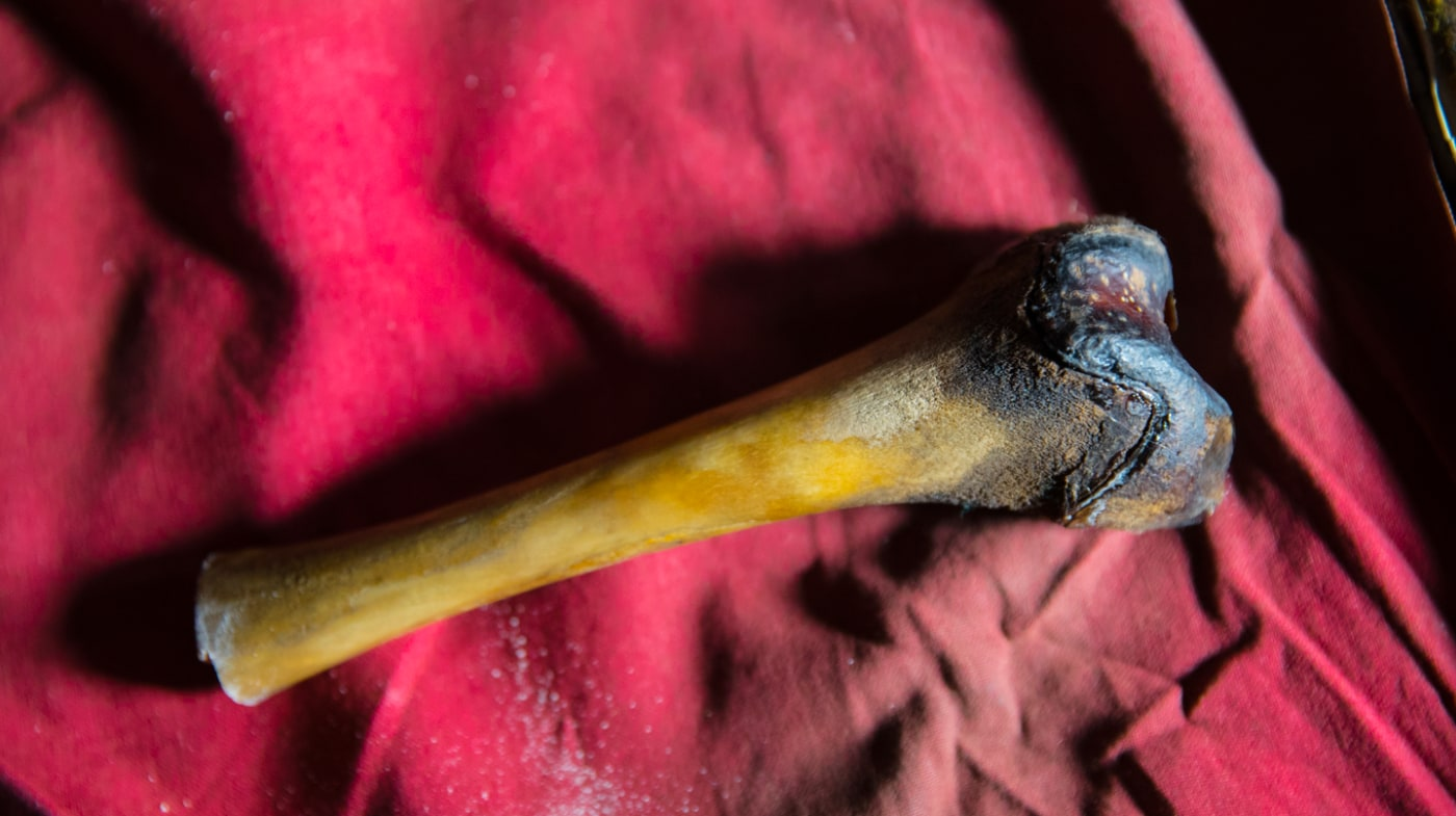 A femur from the decayed body of a purported Yeti found in a cave in Tibet.