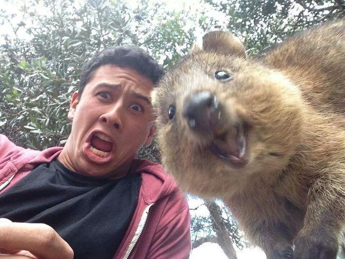 Funny Quokka Selfie