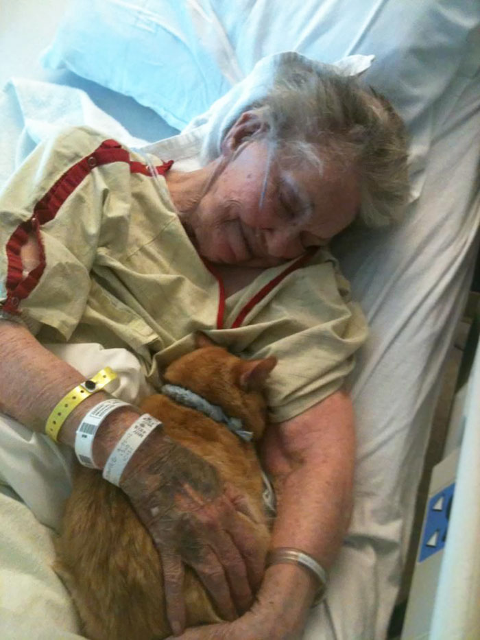 Her Dying Wish Was To See Her Best Friend, Oliver The Cat, One Last Time To Say Goodbye