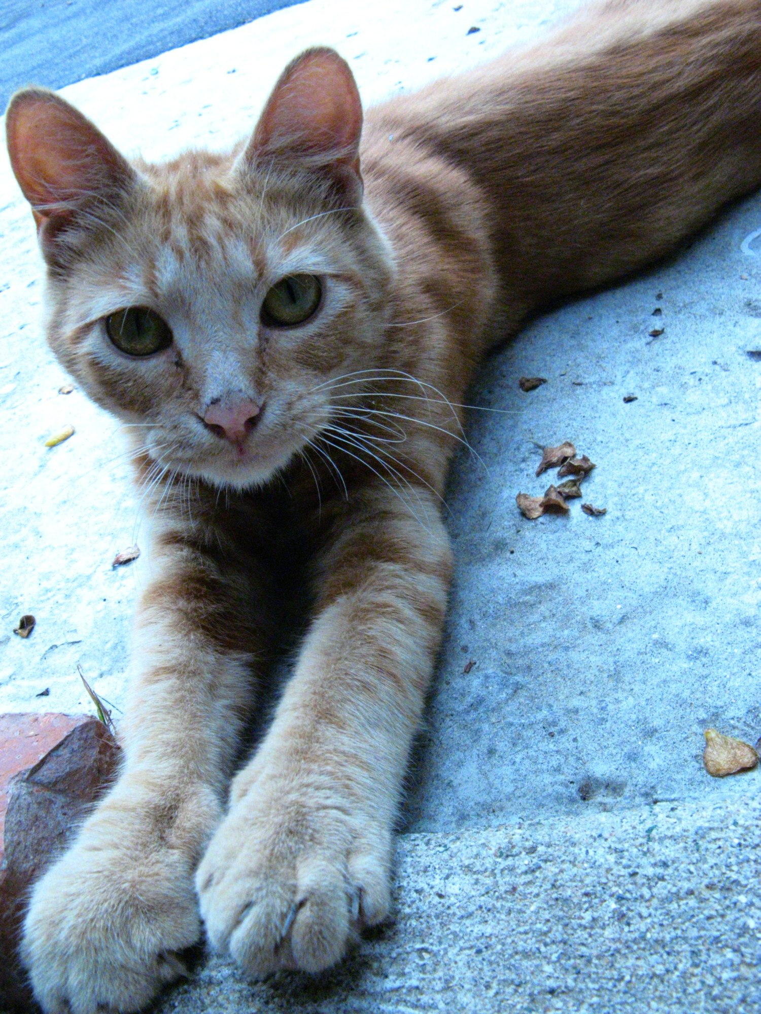 skinny cat photo
